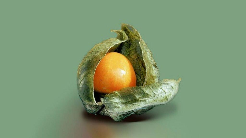 Damaged Colonial Fruit